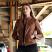Whet-Blu-FAVORITE-WBL1025-Womens-Leather-Fashion-Jacket-Whiskey-1